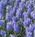bloemenpracht in de Prinsenhoftuin